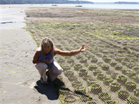 A local shellfish grower at Stratford-Meyer Geoduck Farm offers Corps regulators a tour of the geoduck farm near Vaughn, Wash.  Recently, all the state's shellfish farms simultaneously needed to submit preconstruction notices, which the Seattle District would need to review and use to make permit decisions.