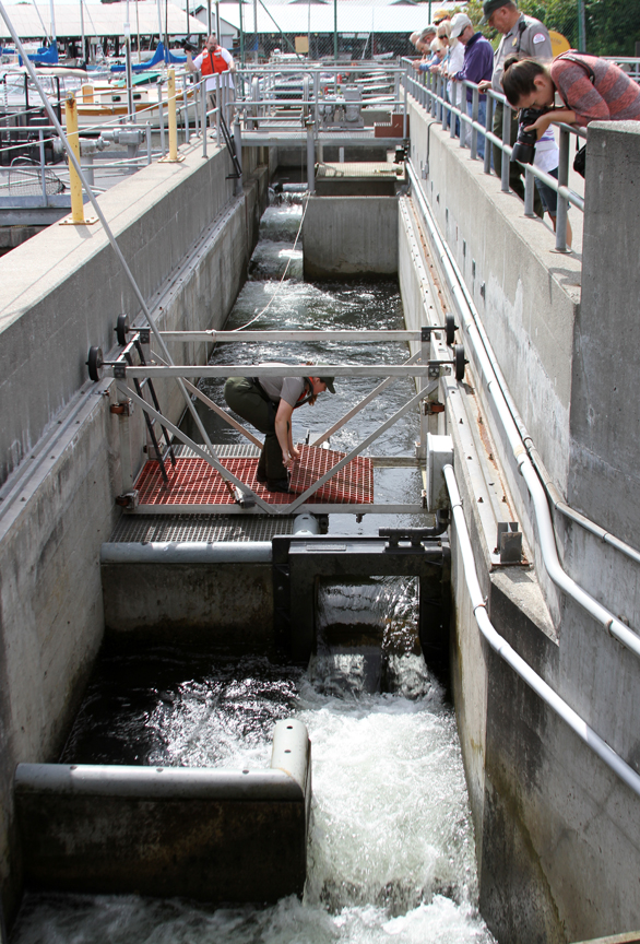 Seattle district missions civil works locks and dams for Ballard locks fish ladder