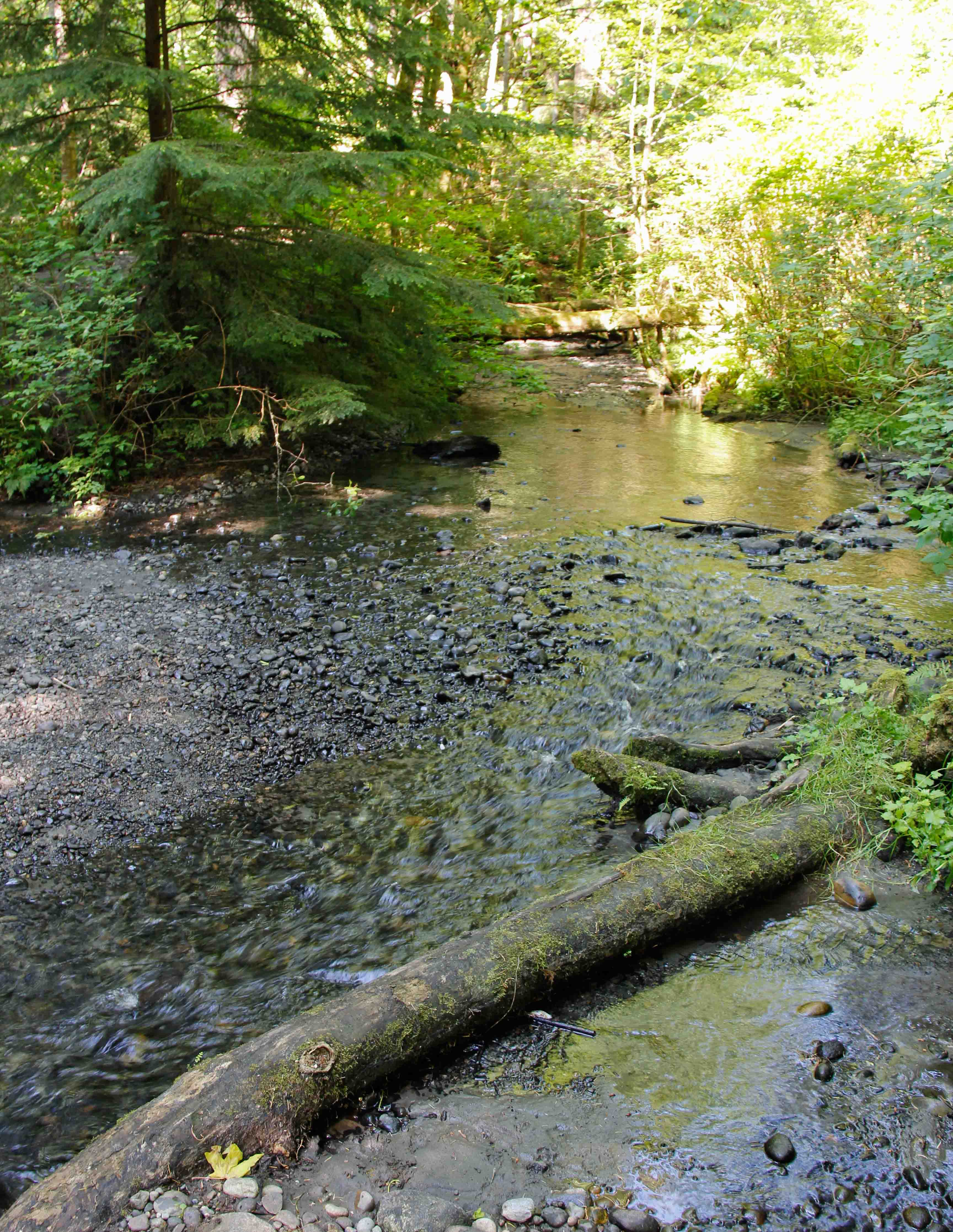 Photo of Boeing Creek, Shoreline, Washington